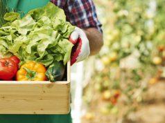 agroalimentare-crescono-imprese-e-si-rafforza-export